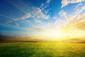 光の射す芝生